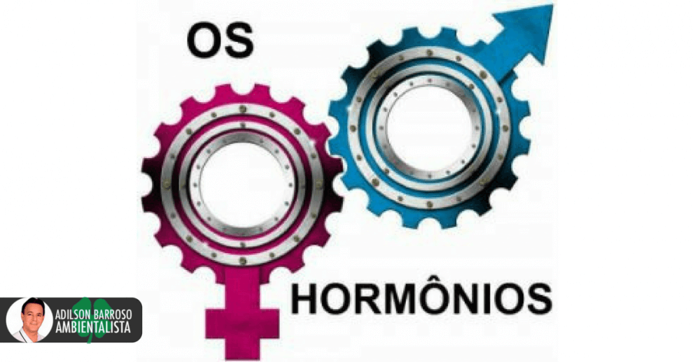 hormônios (Imagem divulgação)