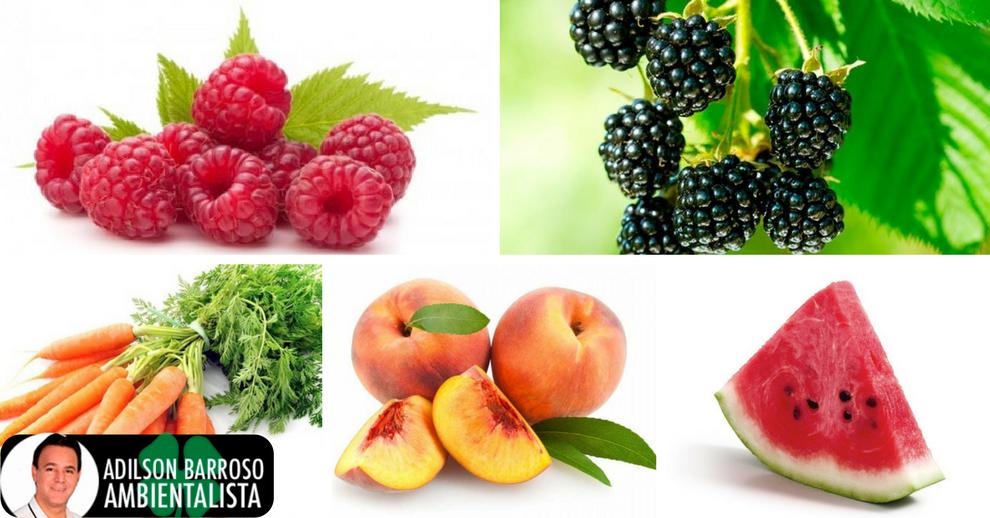 Os 5 melhores alimentos para se consumir no verão.:(foto divulgação)