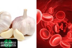 Você sabia que o alho é um purificador natural do sangue?Saiba de seus benefícios.:(foto divulgação)