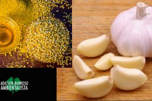 colesterol (Imagem divulgação)