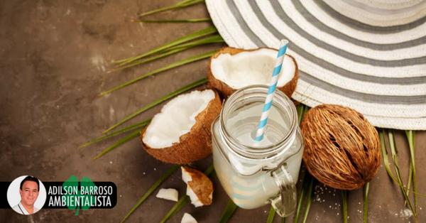 8 benefícios da água de coco conheça