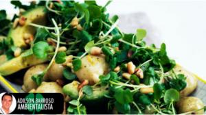 batata (Imagem divulgação)