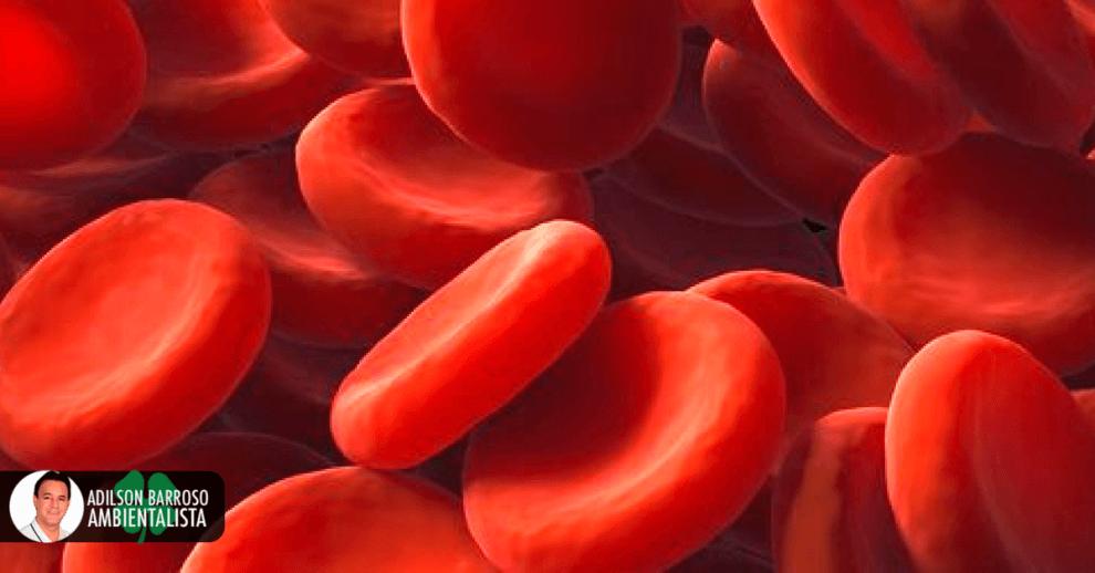 sangue (Imagem divulgação)