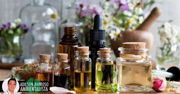 Remédios naturais incríveis para dizer adeus a dores de cabeça