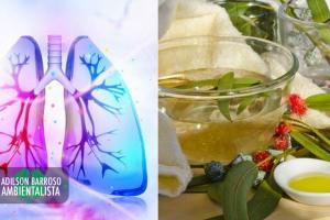 pulmões (Imagem divulgação)