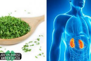 Prepare esta planta em infusão e limpe seus rins