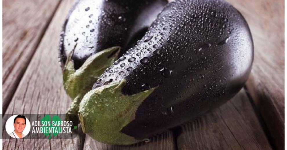 berinjela (Imagem divulgação)