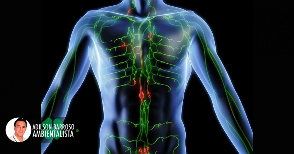linfático (Imagem divulgação)