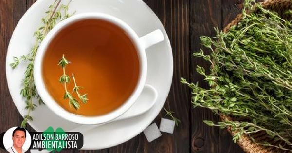 Limpe e fortaleça os brônquios com ervas medicinais