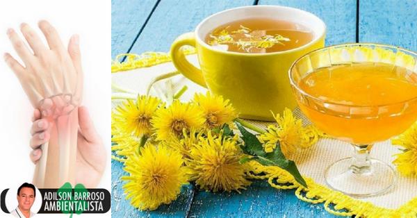 Dandelion drink: um remédio caseiro para cuidar dos seus ossos