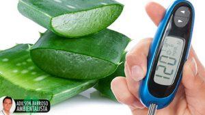7 razões para usar aloe vera para tratar diabetes