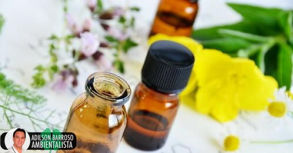 6 remédios com óleo de prímula para a saúde das mulheres