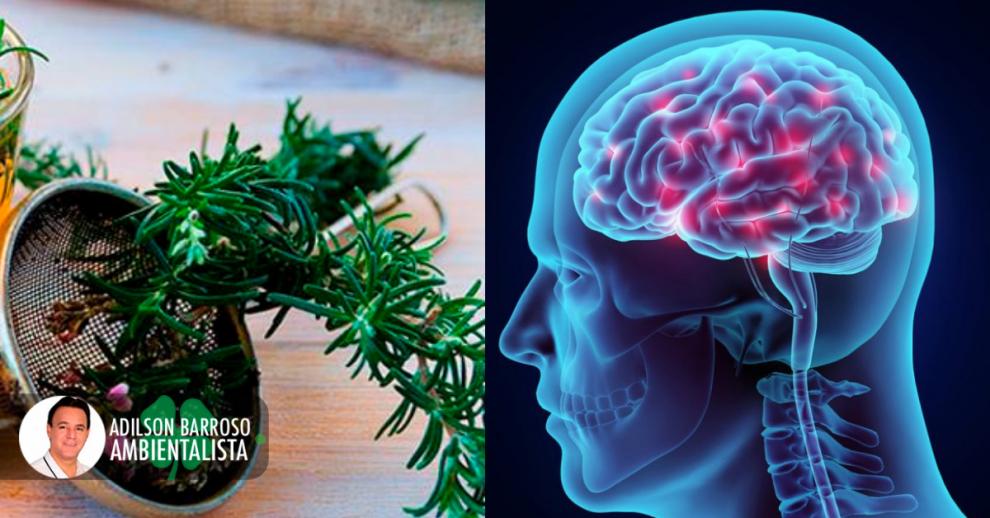 cérebro (Imagem divulgação)