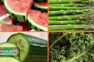 nutrientes (Imagem divulgação)