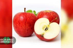 benefícios da maçã (Imagem divulgação)